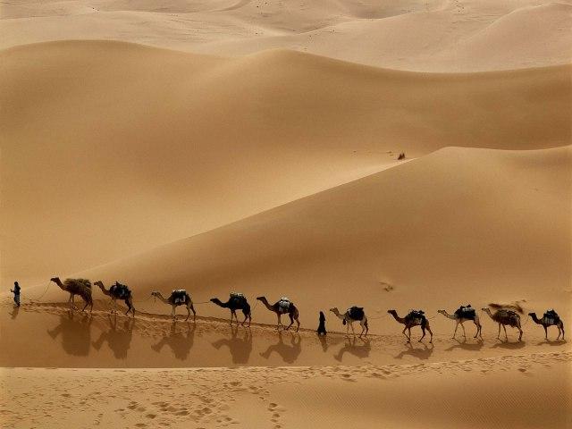 530-paysage---desert-WallFizz